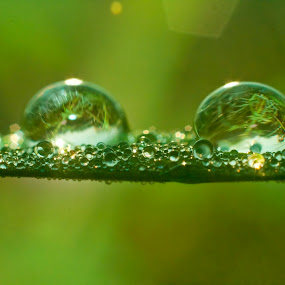 dew by Septyan Lestariningrum - Nature Up Close Natural Waterdrops