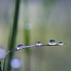 Welcome to my World by Diane Hallam - Nature Up Close Natural Waterdrops ( water, nature, minimalism, rain, droplets,  )