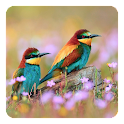 Pájaros Fondo Animado icon