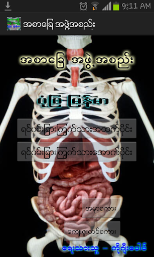 Digestive System 3D