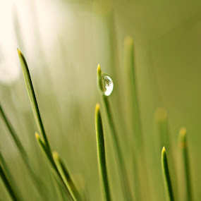 Green by Milica Đorđević - Nature Up Close Leaves & Grasses ( green spring drop )