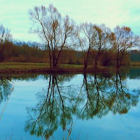 Autumn Reflection by Nat Bolfan-Stosic - Nature Up Close Trees & Bushes ( mirror, reflection, autumn, trees, lake )