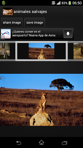 images wild animals for watsap