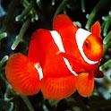 3D cute fish logo