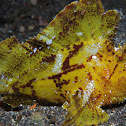 Paper fish or Leaf scorpion fish