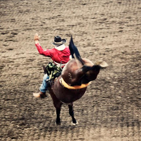 YeeHAW! by Bethany McGregor - Animals Horses