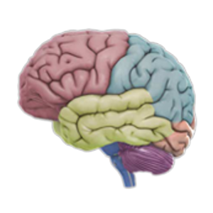 3D Brain for Android