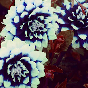 Blue and Red in the Garden by Nat Bolfan-Stosic - Flowers Flower Gardens ( red, blue, house, flowers, garden,  )