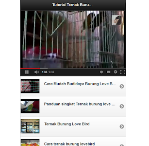 Tutorial Ternak Lovebird screenshot 0