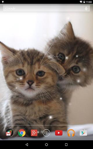 無料个人化Appの猫壁紙|記事Game