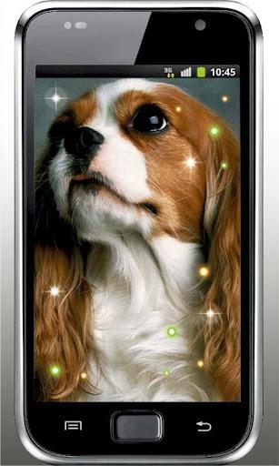 Cute Dogs HD live wallpaper