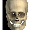 Visual Bones icon