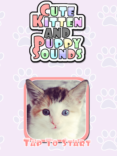 Cute Kitten Puppy Sounds HD