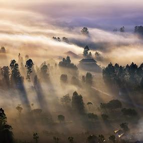 An Early Morning at Desa Pinggan by Eggy Sayoga - Landscapes Prairies, Meadows & Fields ( bali, kintamani, fog, indonesia, sunrise, mist, city )