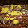 Dog Vomit Slime Mould