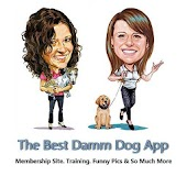 The Best Damm Dog App
