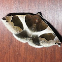 Passenger Moth