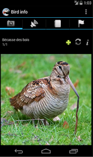 Ornidroid - screenshot thumbnail