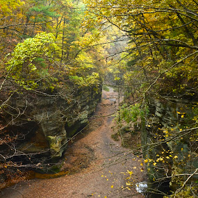 Matheson State Park, Utica, Illinois by Norine DeSilva - Landscapes Caves & Formations ( path, nature, landscape )