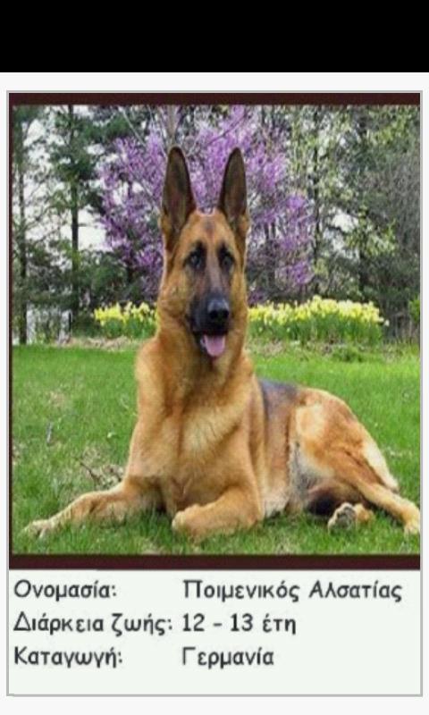 Ράτσες Σκύλων - Dog Breeds - screenshot
