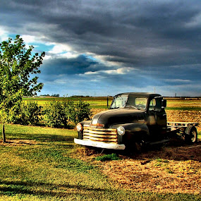 Bob's Truck on a Spring Day by Julie Dant - Transportation Automobiles ( antique vehicles, black trucks, truck, old chevys, chevrolet, antique trucks, vehicles, country rural, chevy, spring, land, device, transportation )
