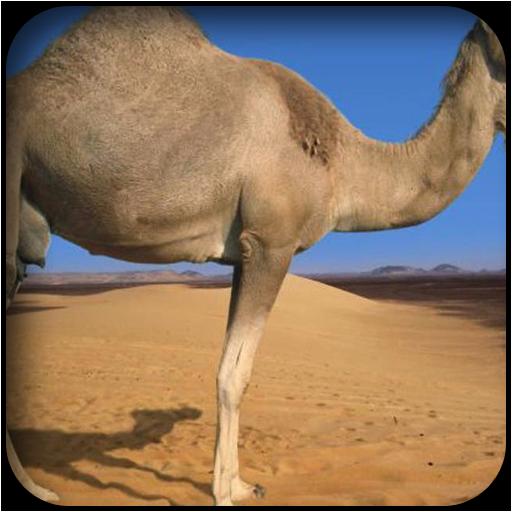 駱駝壁紙 個人化 LOGO-玩APPs
