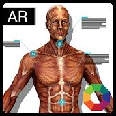 OctagonAR Humanoid