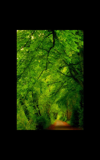 HD Photo Nature Forest LWP