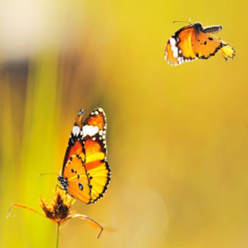 8- Animals wallpaper 2014 攝影 App LOGO-APP試玩