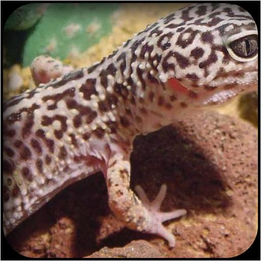 蜥蜴壁紙 個人化 LOGO-玩APPs