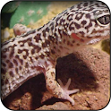 Lizard Wallpapers icon
