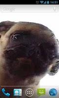 Screenshot of Dog Licker Live Wallpaper FREE