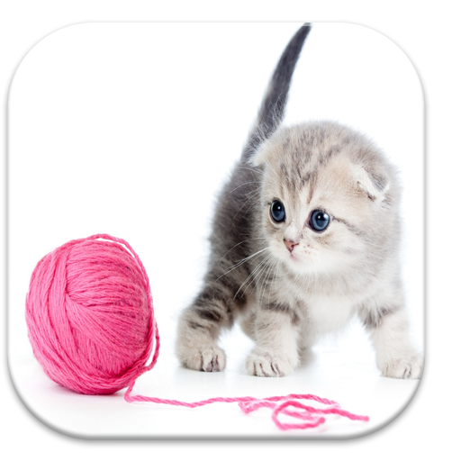 Cute Kitten Wallpapers Free