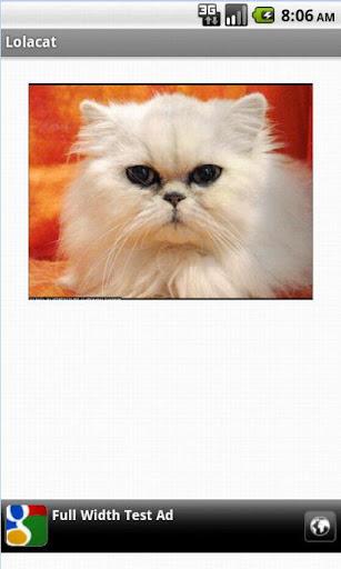 Lolacat