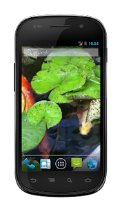 Koi Fish Pond Wallpaper - screenshot thumbnail