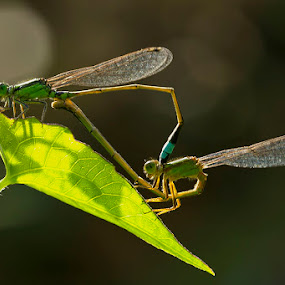 Make in love by Fadel Satriawan - Animals Insects & Spiders