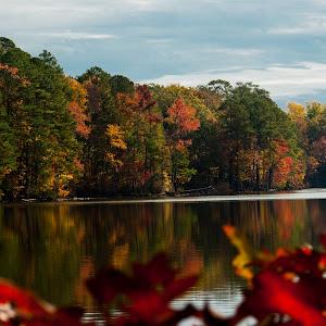 Lakeside Trees 2.jpg