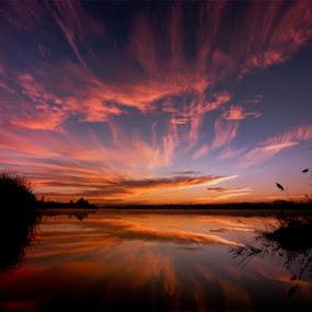 purple sky by Alexandru Ciornea - Landscapes Sunsets & Sunrises ( purple )