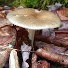 The Platterful Mushroom