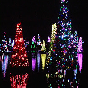 SeaWorld by Holly Herrmann - Public Holidays Christmas ( seaworld, mood, mood factory, holiday, christmas, hanukkah, red, green, lights, artifical, lighting, colors, Kwanzaa, blue, black, celebrate, tis the season, festive, decoration, object )