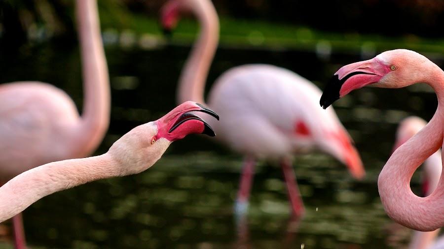 Wife!! by Ramesh P - Animals Birds (  )