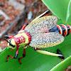Koppie foam grasshopper /milkweed locust
