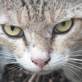 Look at my eyes.................................. by Palash Panda - Animals - Cats Portraits