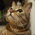 Cats Charity Live Wallpaper logo