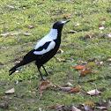Makapai (Magpie)