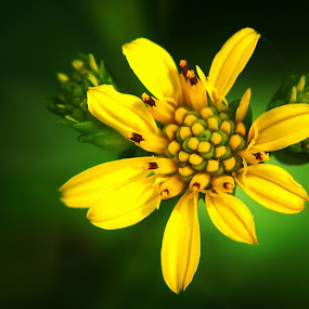 by Ribut Bagus - Flowers Flowers in the Wild