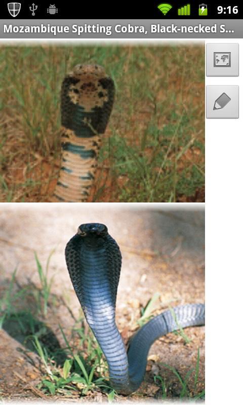 eSnakes of Southern Africa- screenshot