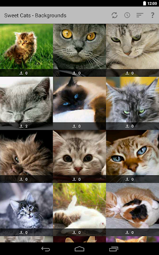 Cats pictures HD