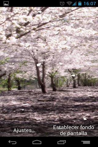 Fondo Animado Bosque Japonés