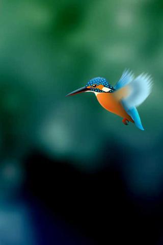 Kingfisher Live Wallpaper